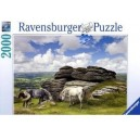 Puzzle 2000 pz Cavalli del Dartmoor, National Park Art.166343