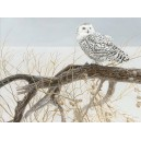 Fallen Willow Snowy Owl - Cobble Hill Puzzle 500 Pz.