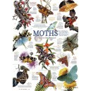 Moth Collection - Cobble Hill Puzzle 1000 Pz.